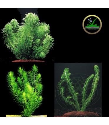 Kit Plantas Ciclado