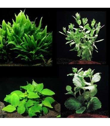 Kit Plantas Principiantes